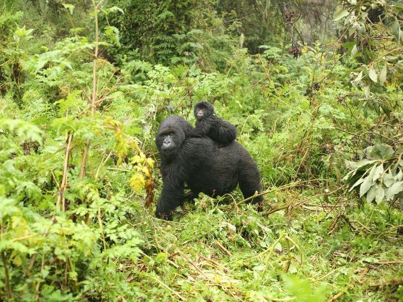 Parques de Uganda con Kibale