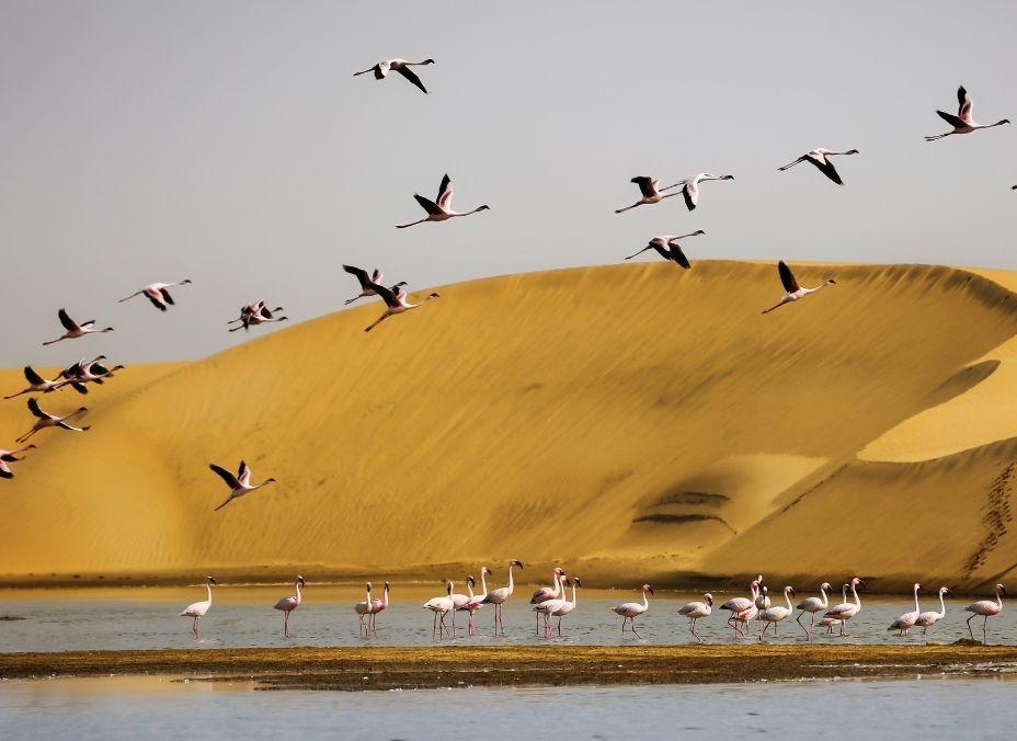 Encantos de Namibia