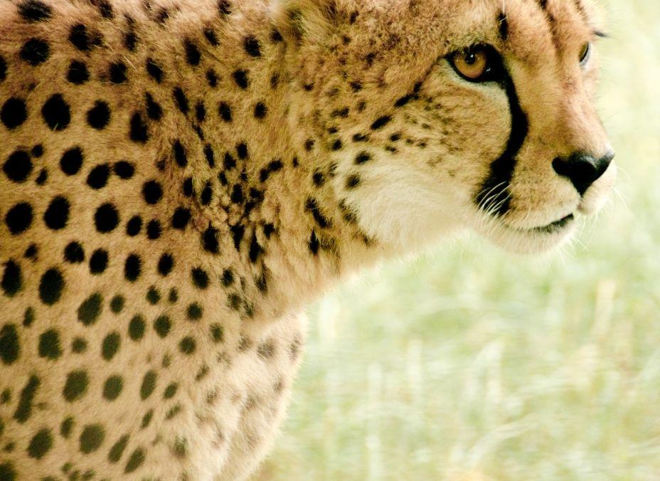 Safari Jambo 2022