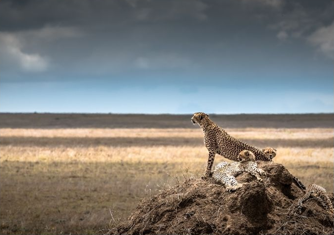 Safari Ngorongoro - Ruta 1 - salida Martes