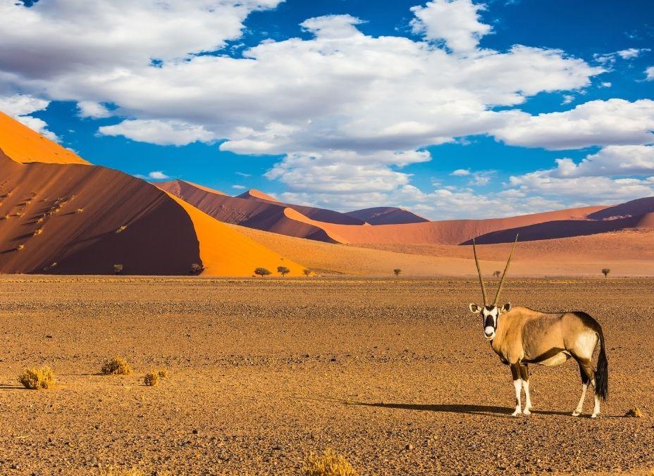 Namibia Salvaje
