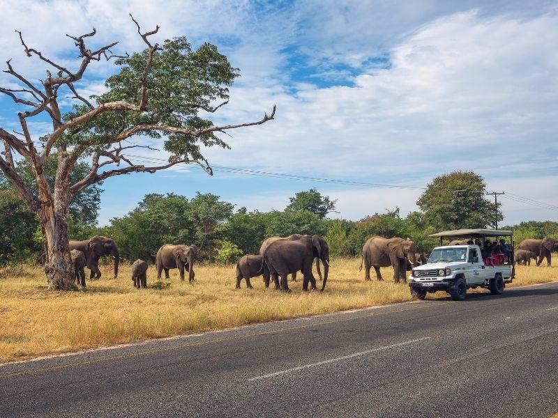Reservas Privadas Sudáfrica con Kapama