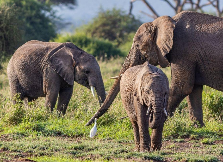 Ruta Masai 2022