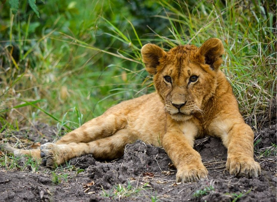 Safari Shimba 2022