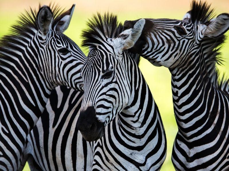 Reservas Privadas Sudáfrica con Moditlo