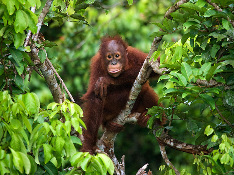 Borneo Indonesio, Kalimantan y Bali