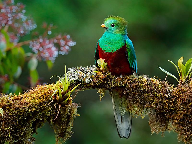 Costa Rica Tropical con Guanacaste