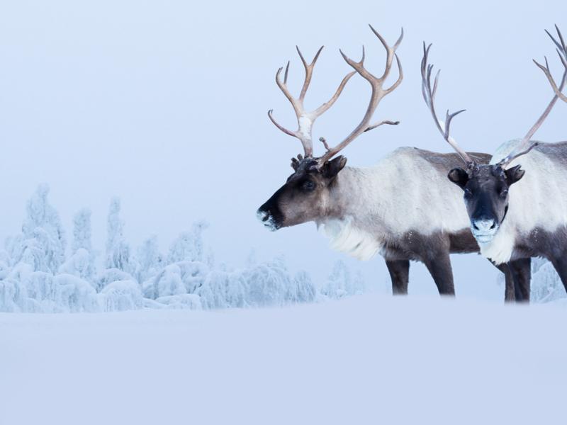Laponia - Fin de Año en Levi - Salida desde Madrid