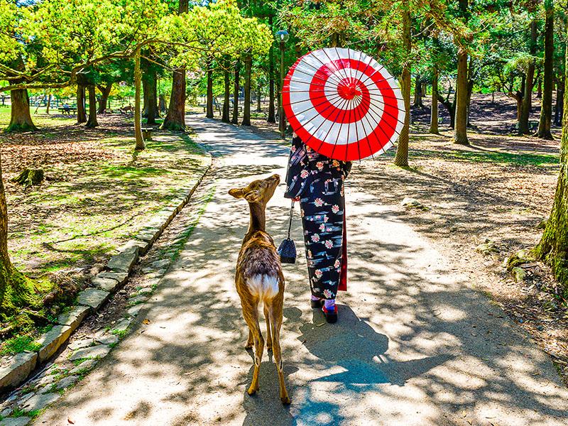 Gran tour de Japón