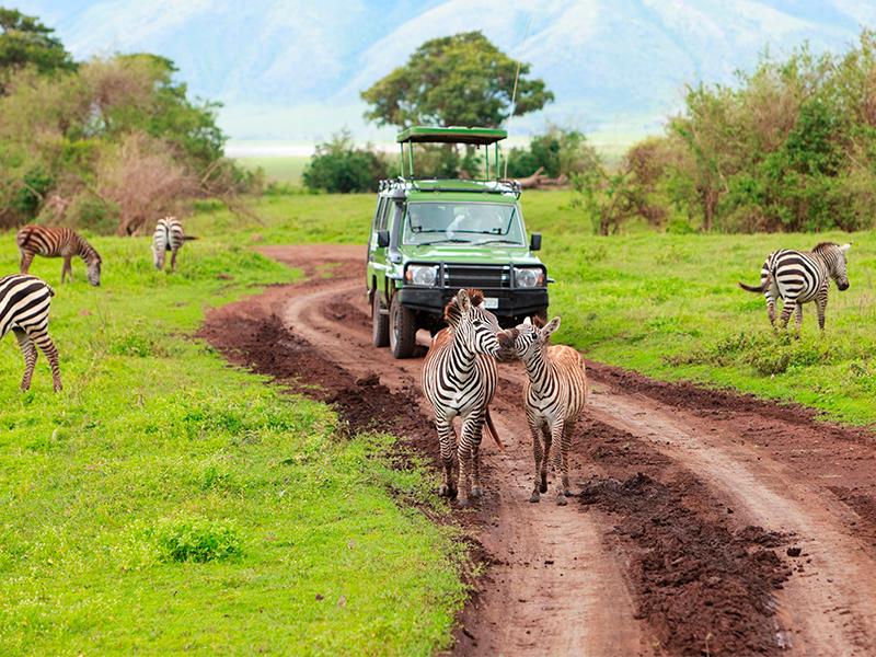 Lo Mejor de Tanzania - Venta Anticipada