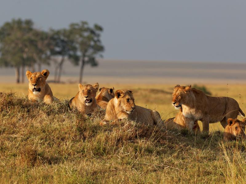 Memorias de África Aventura