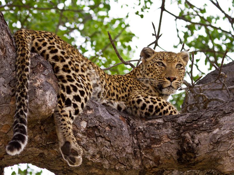 Reservas Privadas Sudáfrica - Kapama