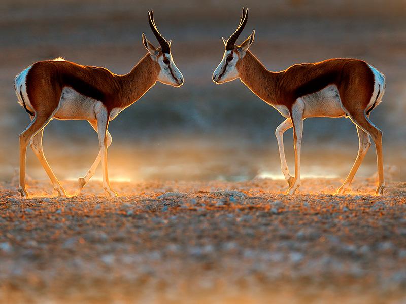 Namibia Express