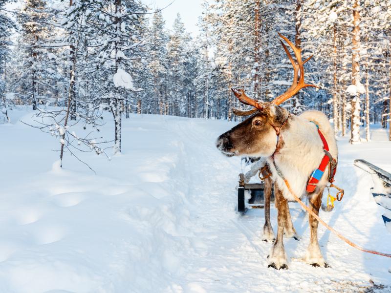 Laponia - Navidad en Ylläs - Salida desde Madrid