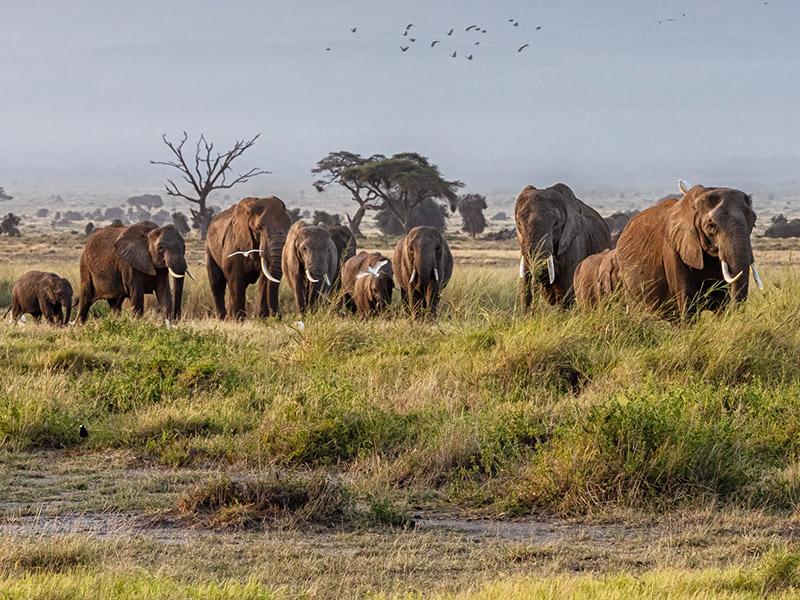 Ruta Masai
