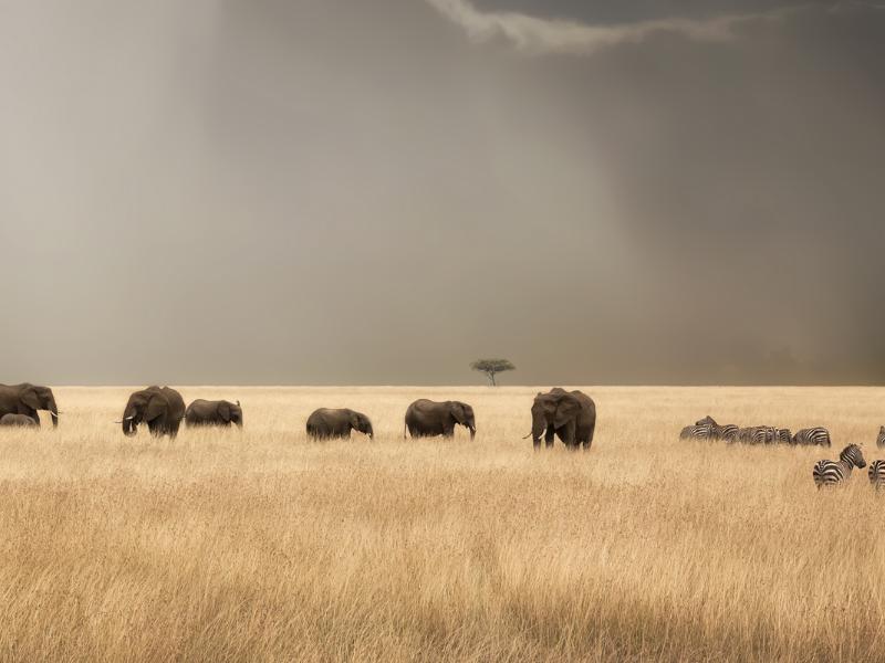 Sabanas de Kenia y Tanzania