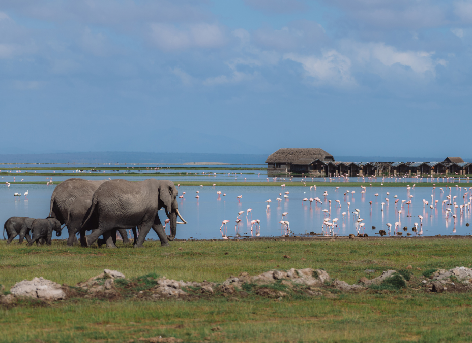 Safari Amani - Extensión Mombasa en tren