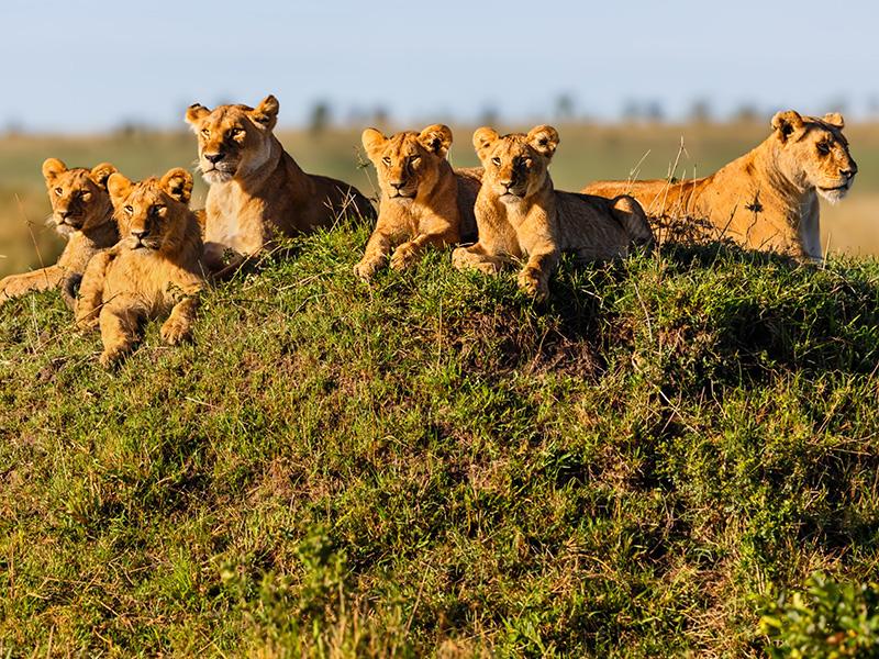 Safari Jambo - Extensión Zanzíbar