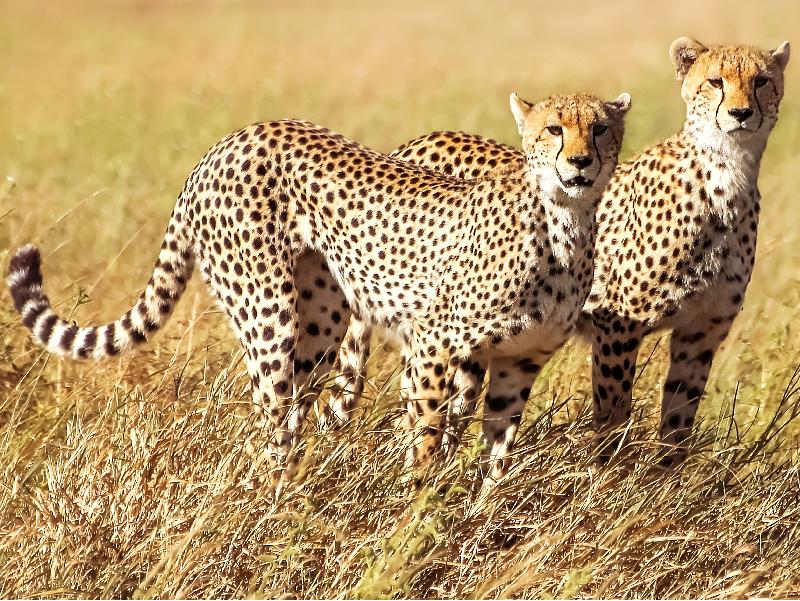 Safari Ngorongoro - Ruta 1