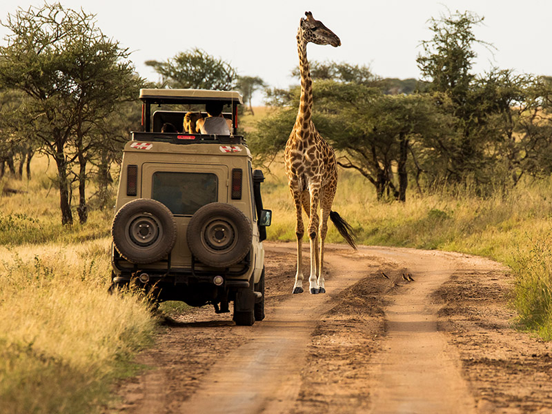 Safari Ngorongoro Ruta 1 - Privado