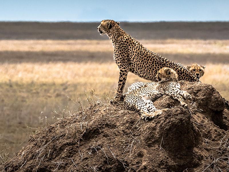 Safari Ngorongoro Ruta 1 - Salida lunes