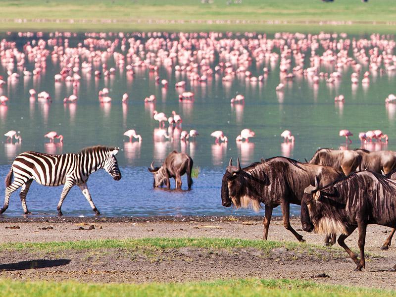 Safari Ngorongoro Ruta 1 - Salida martes