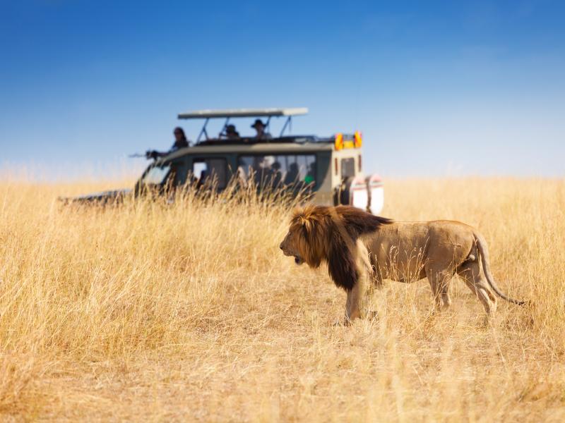 Safari Shimba