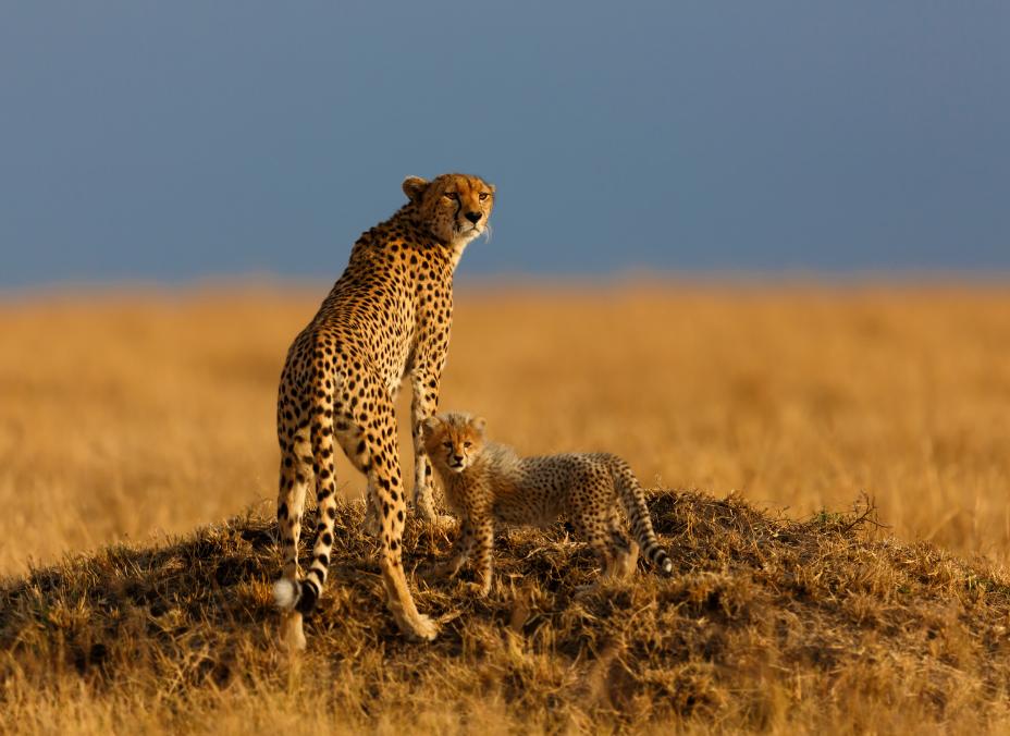 Safari Twiga en privado - Extensión Mombasa en tren