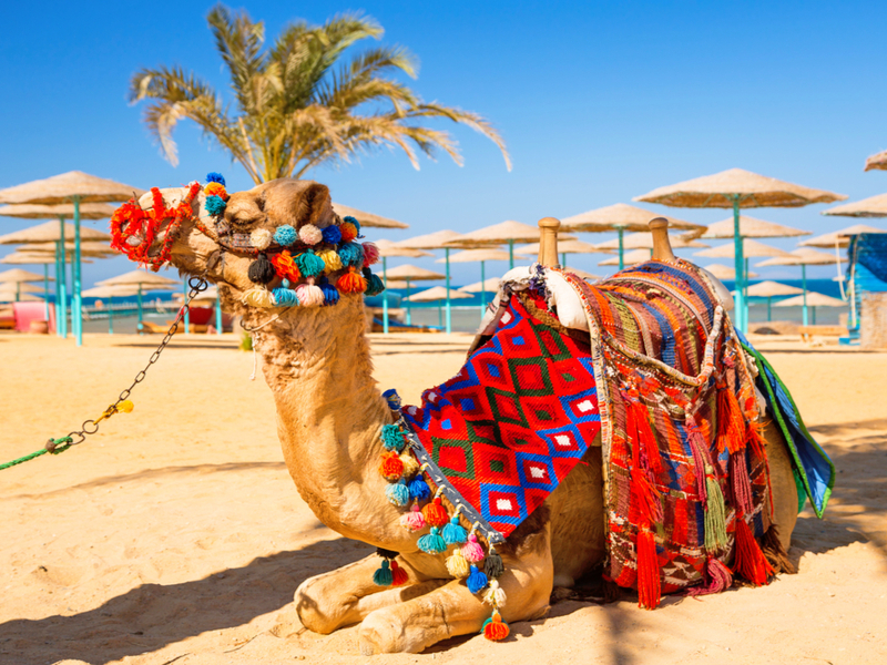 Egipto y Hurghada - Salida miércoles