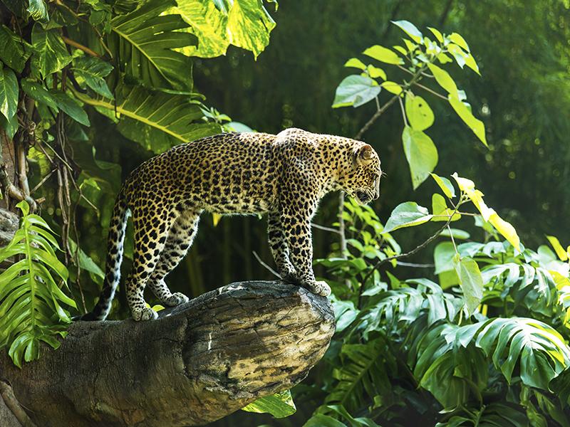 Súper Sri Lanka
