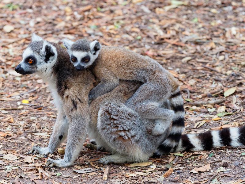 Sur de Madagascar