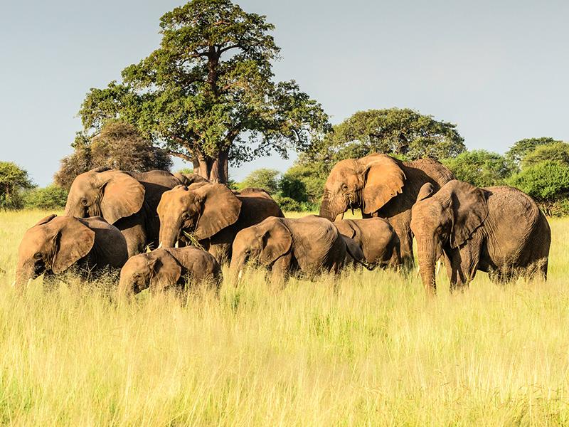 Tanzania al Completo - Salida lunes